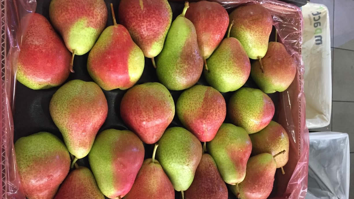 Impala Citrus - pears